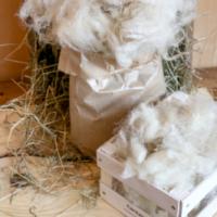 Unbehandelte Schafwolle